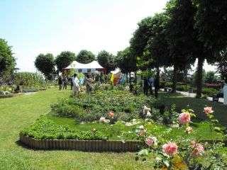 Coniolo fiori monferrato org - Il giardino di barbano ...